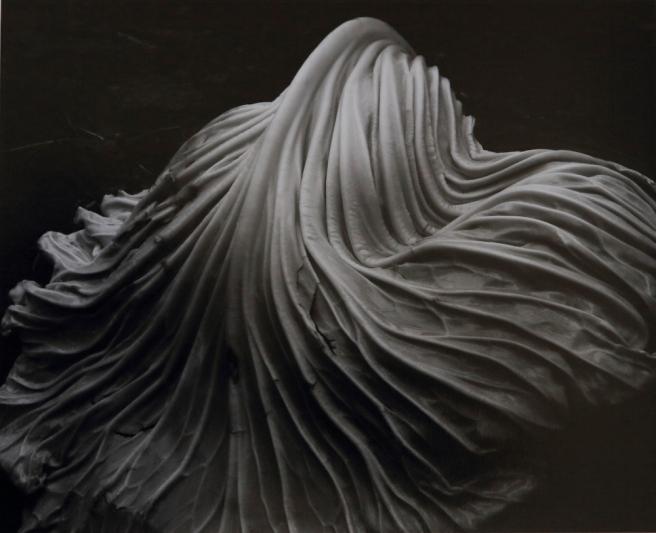 Cabbage-Leaf-1931-39V